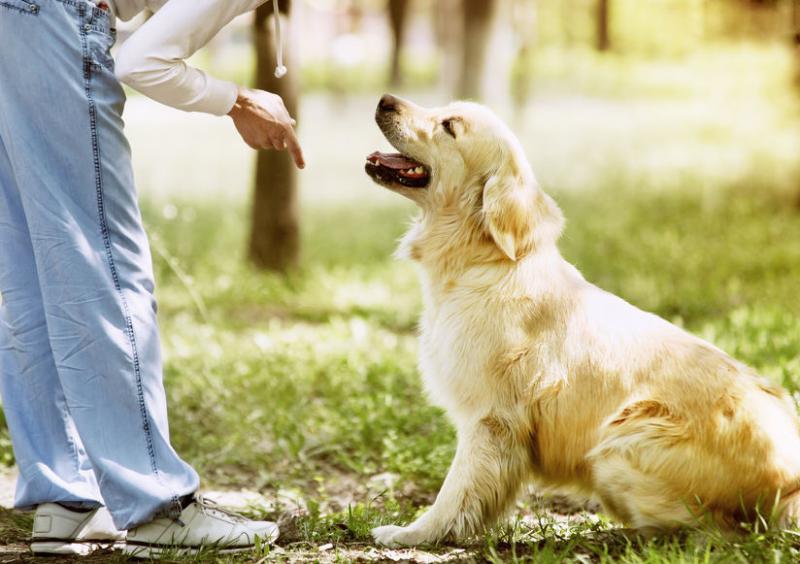 אילוף כלבים- מתקדמים